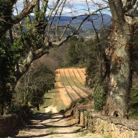 Gorgeous little roads of Provence.