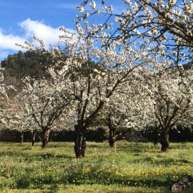 Lead to gorgeous discoveries like these almond trees.